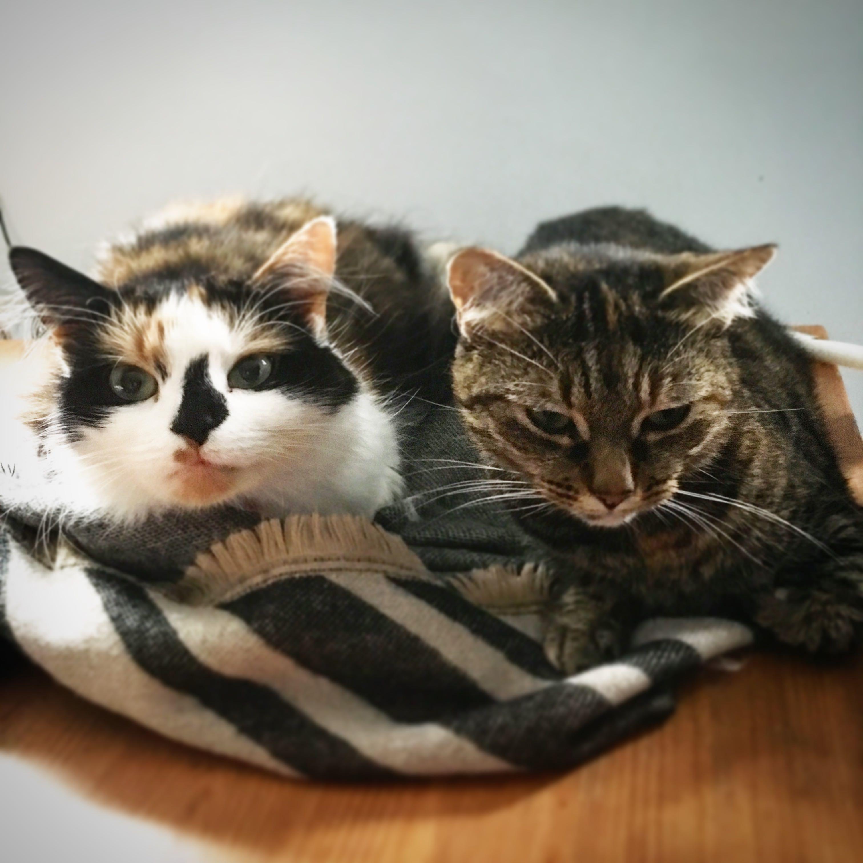 Suzy Farag Cats